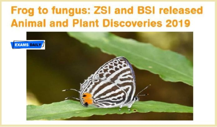 Animal and Plant Discoveries 2019 report released by ZSI and BSI - 544 New species discovered